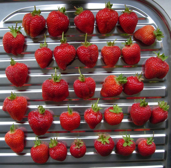 rsz_strawberries_at_4_moss