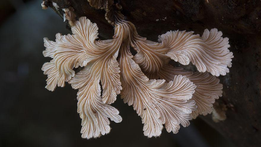 mushroom-photography-steve-axford-110