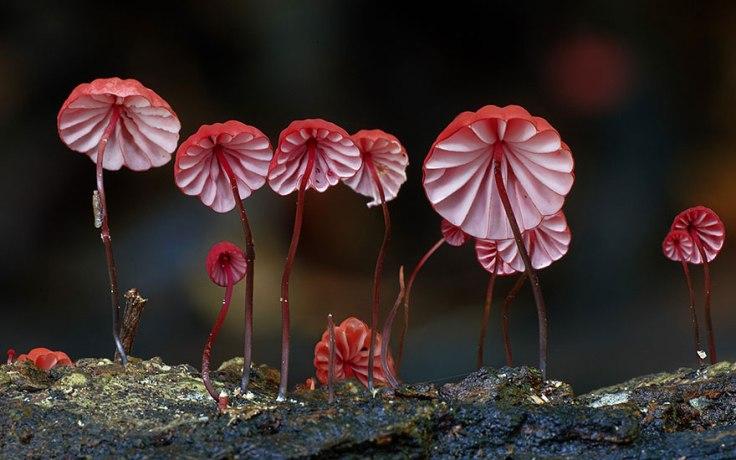 mushroom-photography-steve-axford-151