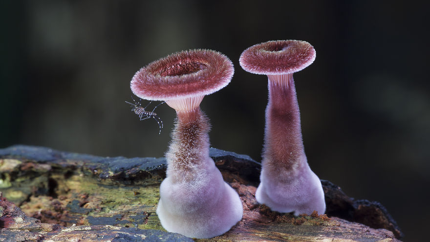 mushroom-photography-steve-axford-510