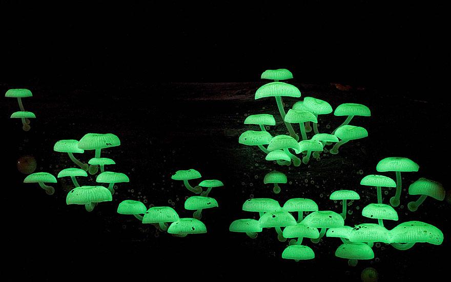 mushroom-photography-steve-axford-610