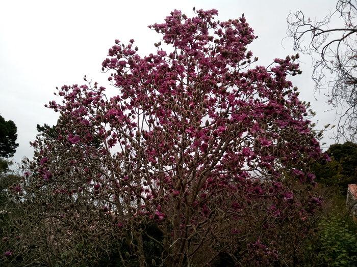 rsz_dbot_magnolia2_01
