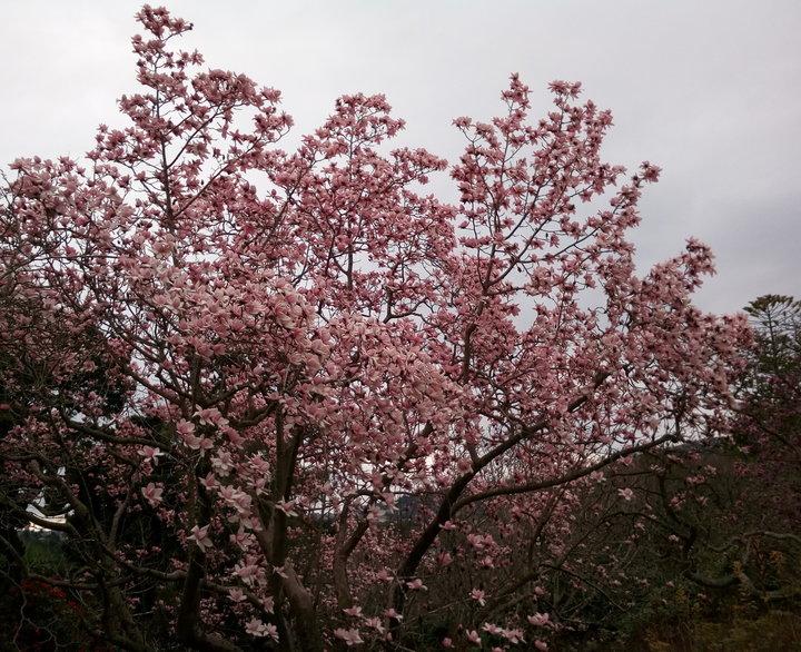 rsz_magnolias_dbot_26Aug2017_02