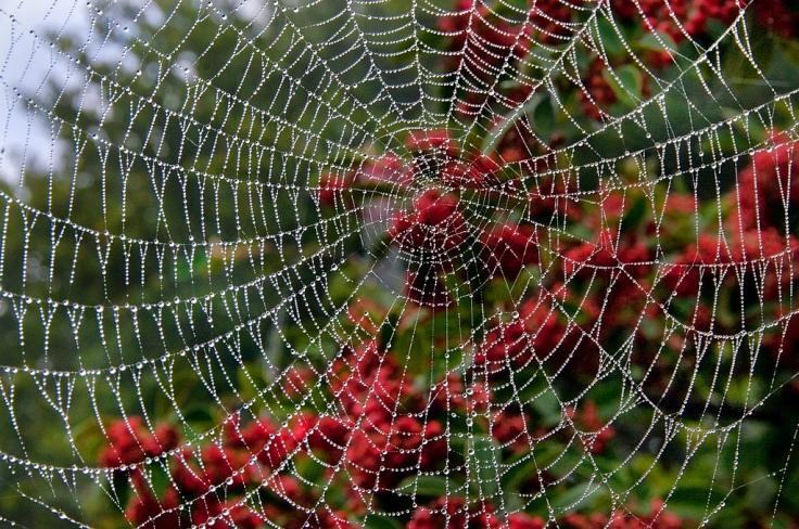 Harold Davis -Wet Web