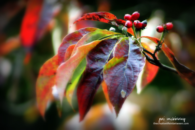 old-dogwood-fall-092017