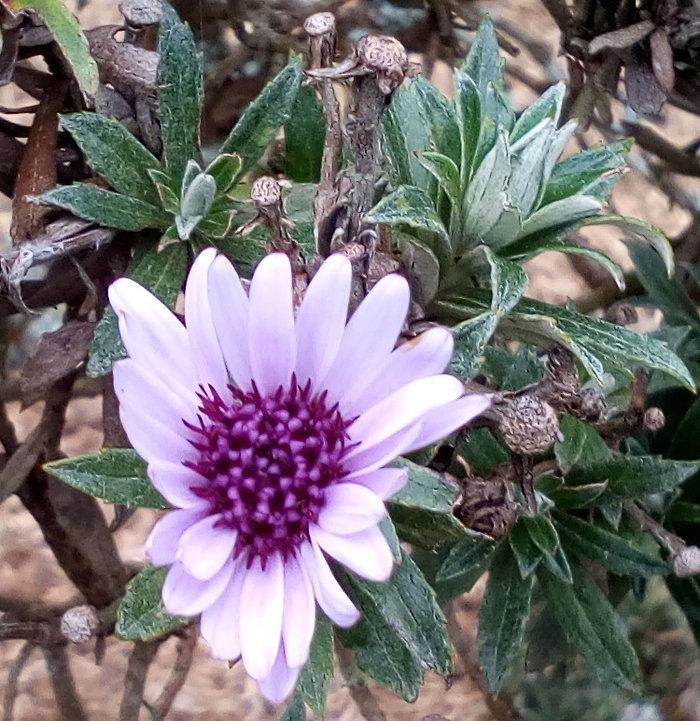rsz_larnach_purple_detail