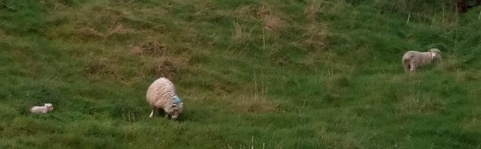 rsz_spring_lamb_02
