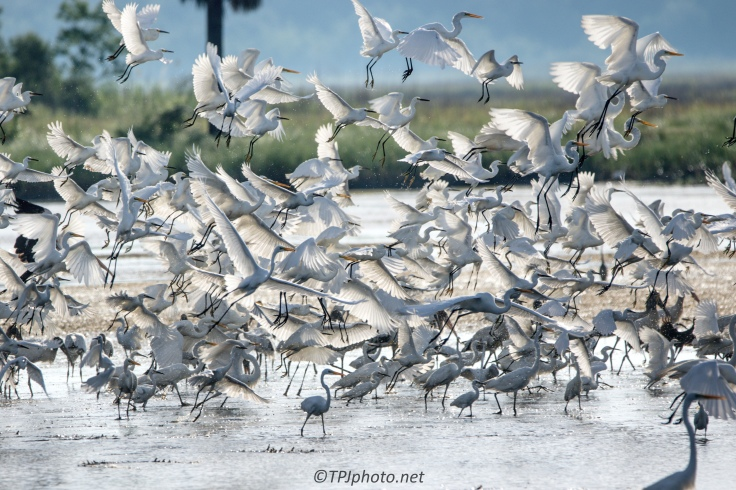 Flocking Birds In A Marsh - click to enlarge