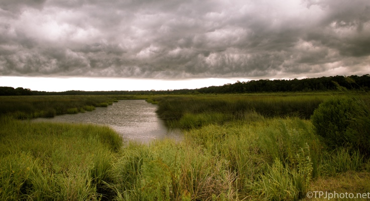 South Carolina, USA Marsh - click to enlarge