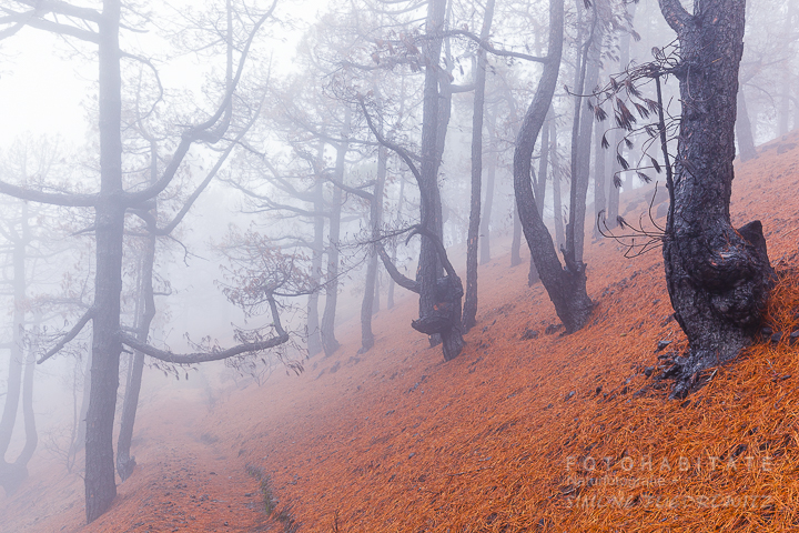 G-0003-fotohabitate_beauty-forest-fire-la-palma