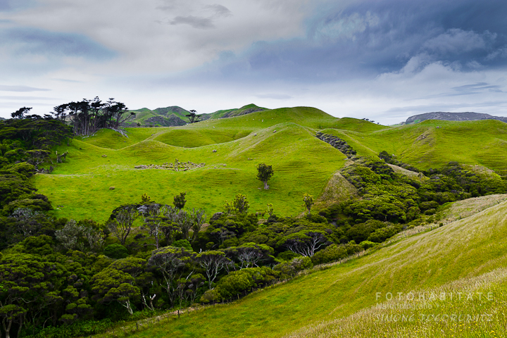 G-0017-fotohabitate_beauty-warariki-farewell-new-zealand