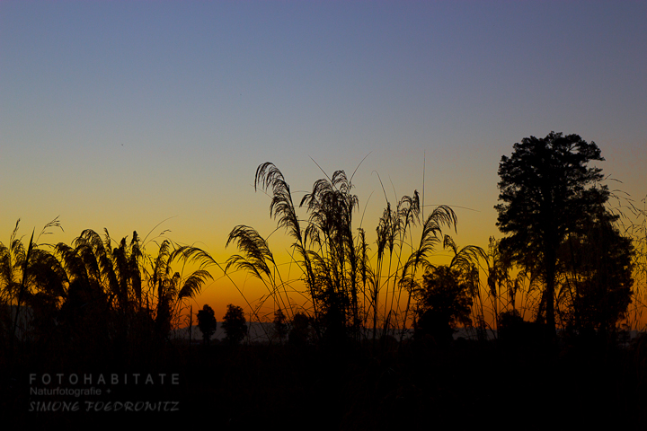 G-0027-fotohabitate_beauty-sunset-plants-silhouette
