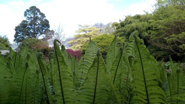 rsz_dbot_lister_garden_fern_700w_01