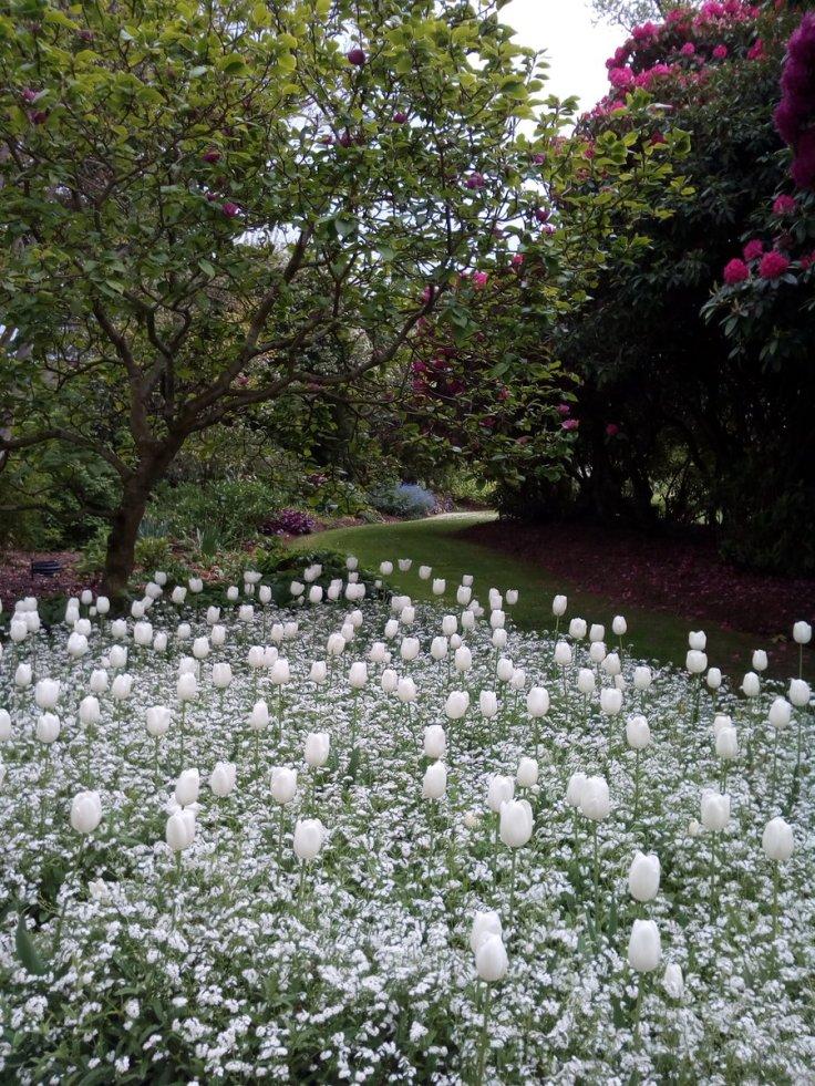 rsz_gore_garden_02