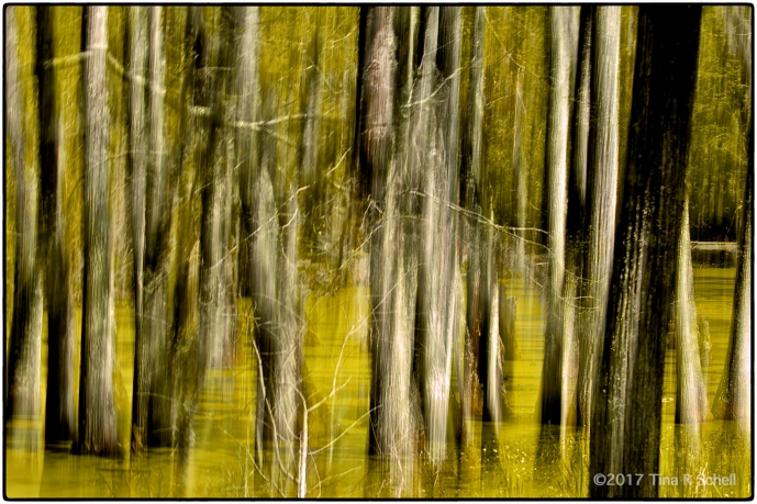 TREES AS ART
