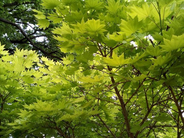 rsz_dbot_acer_spring_01
