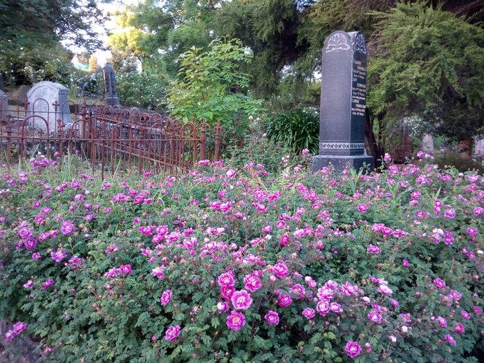 rsz_dun_nth_cemetery_04