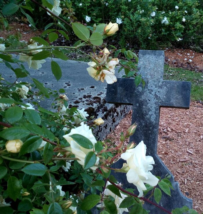 rsz_dun_nth_cemetery_06