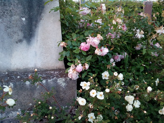 rsz_dun_nth_cemetery_11