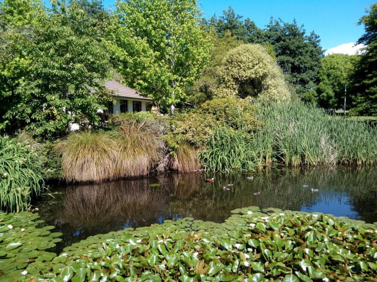 rsz_invermay_pond_05