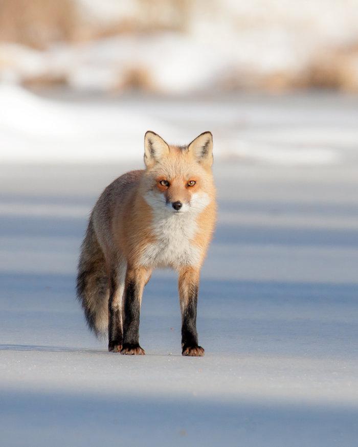 rsz_fox2_30jan_blog