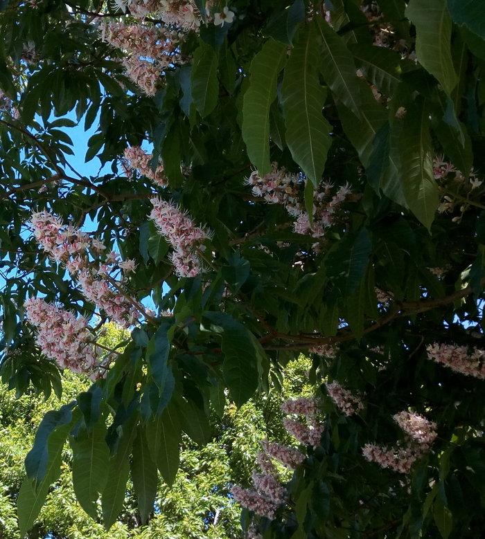 rsz_invermay_trees_02