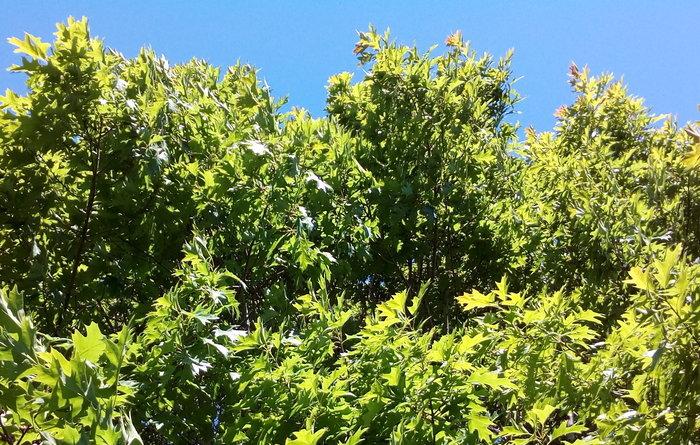 rsz_invermay_trees_04