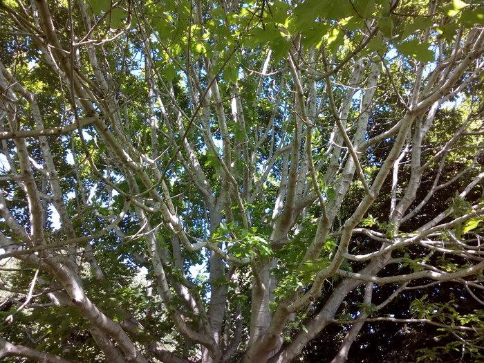 rsz_invermay_trees_05