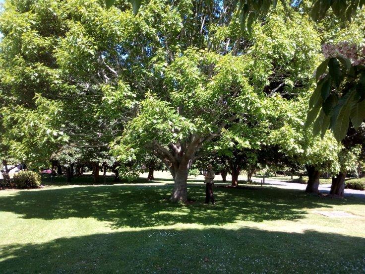 rsz_invermay_trees_06_1200w
