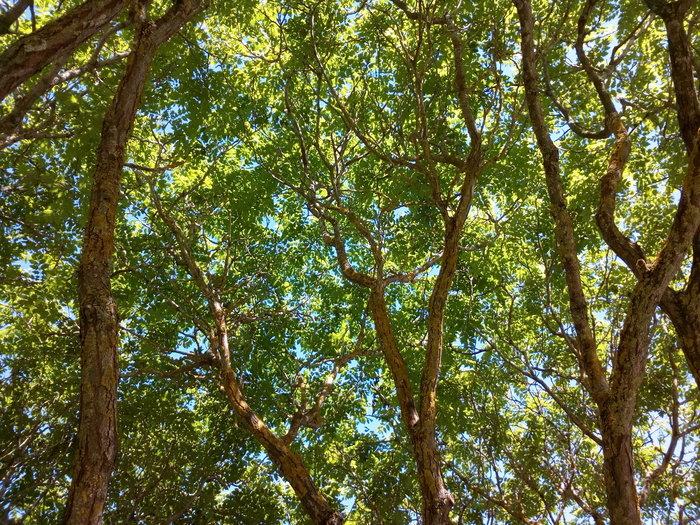 rsz_invermay_trees_08
