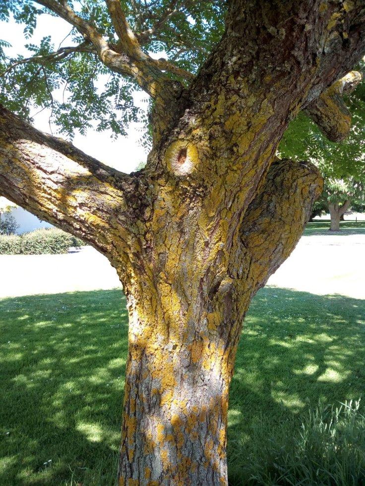 rsz_invermay_trees_09