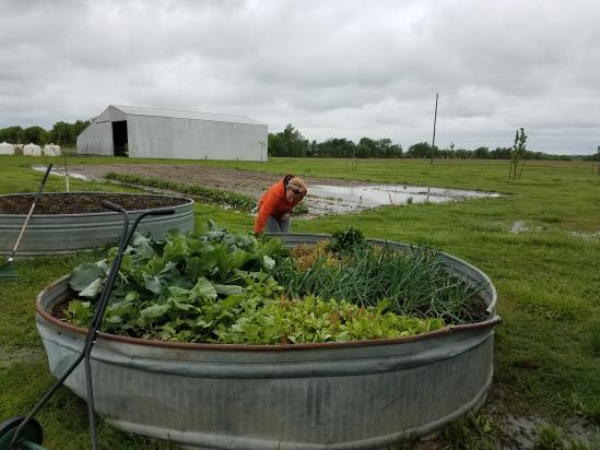 0901_farm_veg_garden