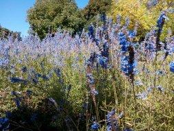 Dunedin Botanic Garden, 29 Mar 2018