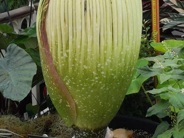 rsz_titan_arum_part03_01