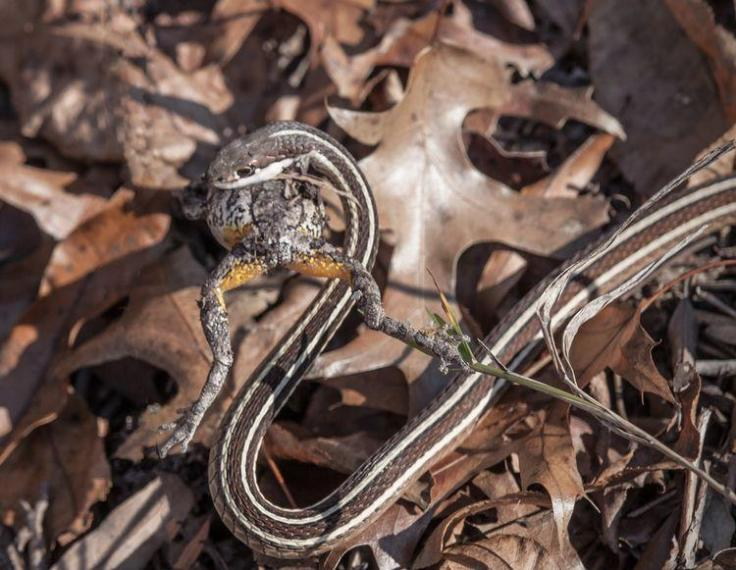snake1_frog_blog