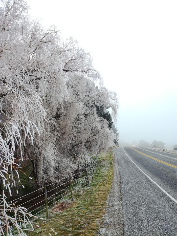 winter_willow_01