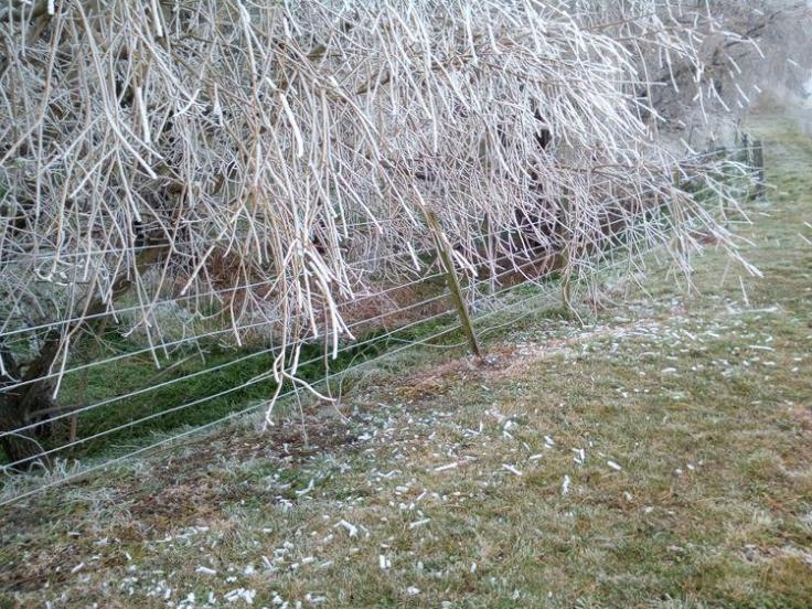 winter_willow_02