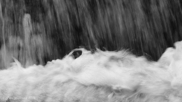 ghosts-in-the-weir-02