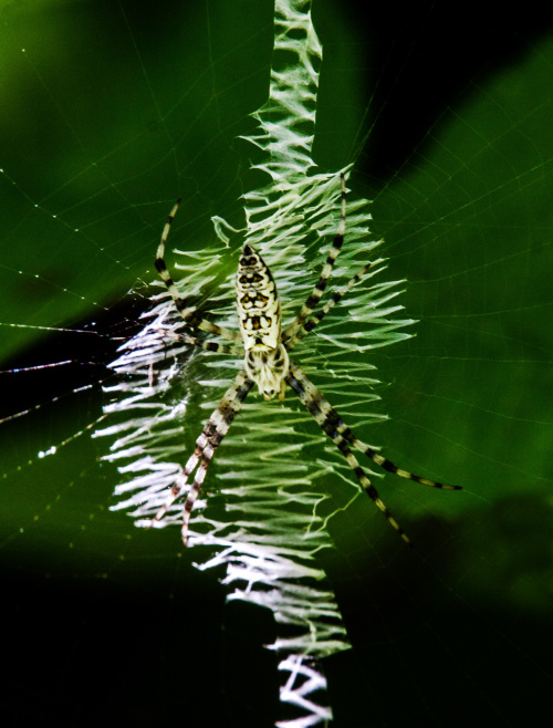 spider1a_9july_blog