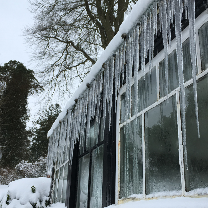greenhouse_icicles