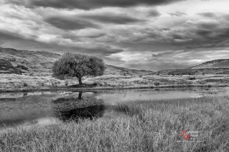 lignum_draco_the-nevis-valley-7