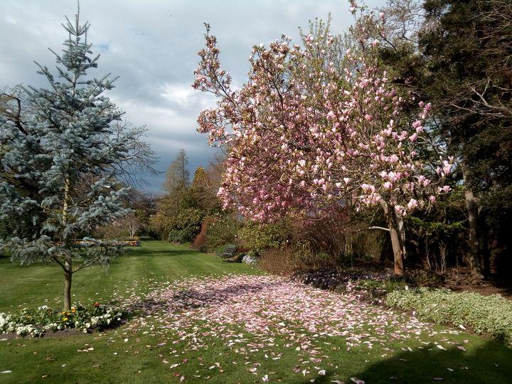 pink_mag_gore_gardens_01
