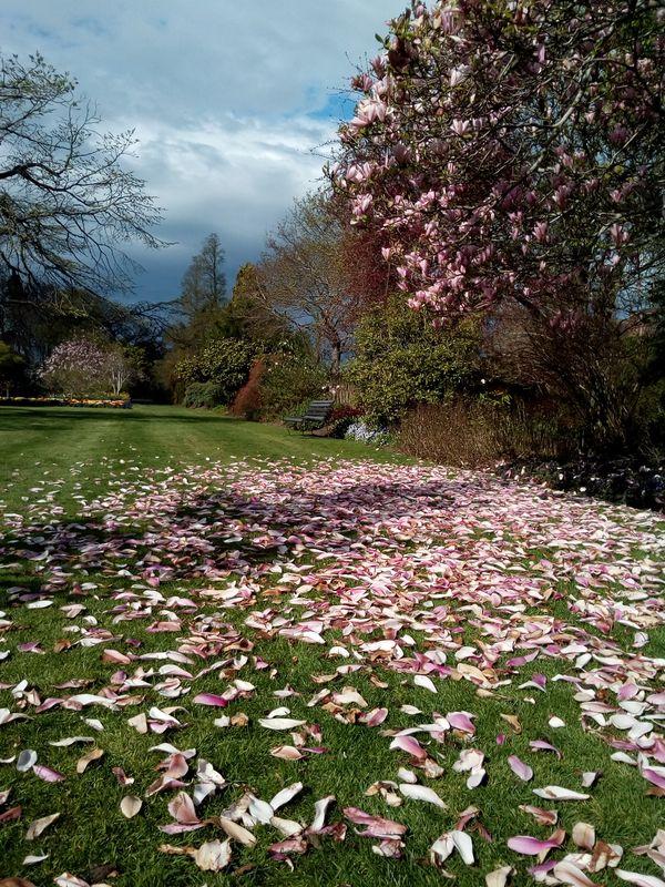 pink_mag_gore_gardens_02