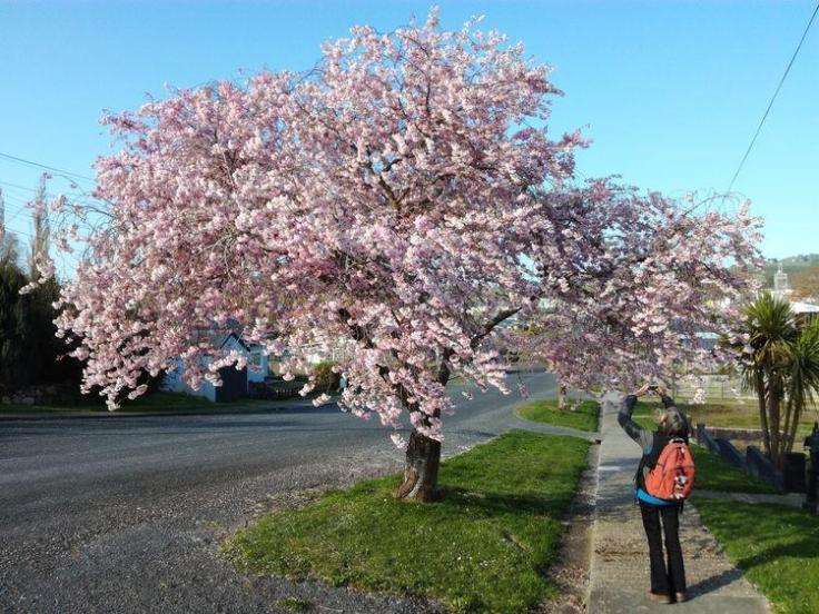 rsz_pink_blossom_03