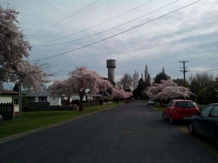 rsz_pink_blossom_04