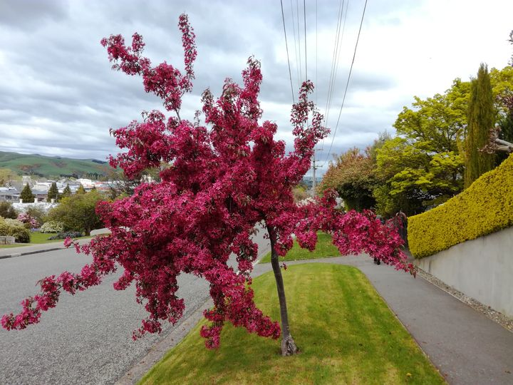 gore_street_blossom_pink_01