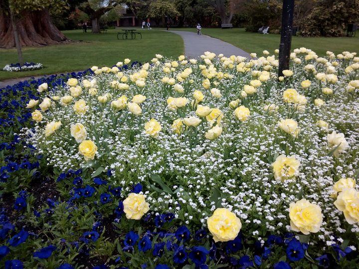 gore_yellow_tulips_04