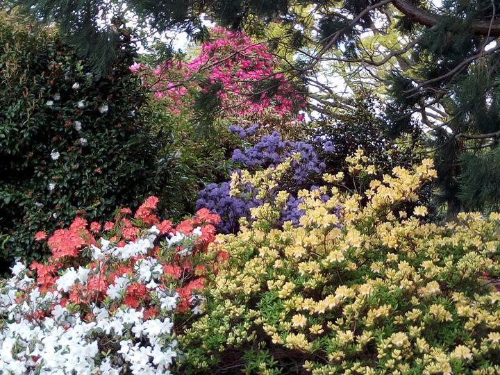 qtn_gardens_flowers_01