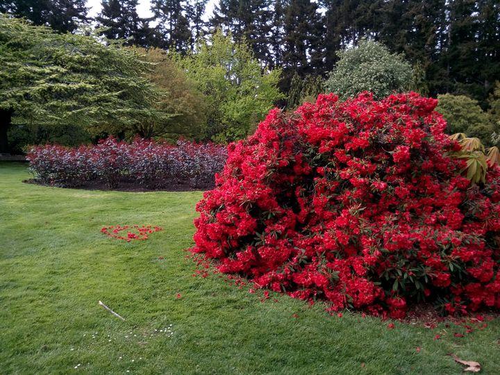 qtn_gardens_flowers_03