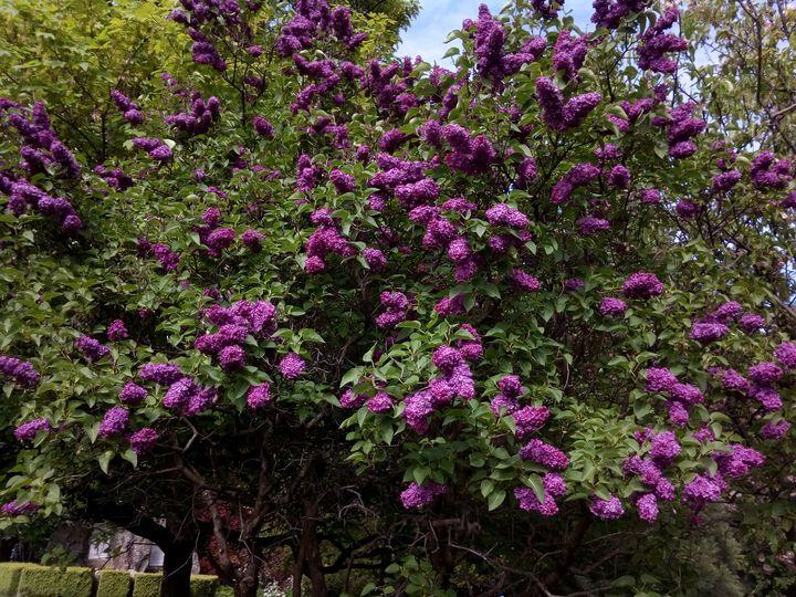qtn_gardens_flowers_05